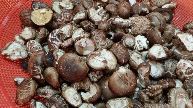 표고버섯 말리기